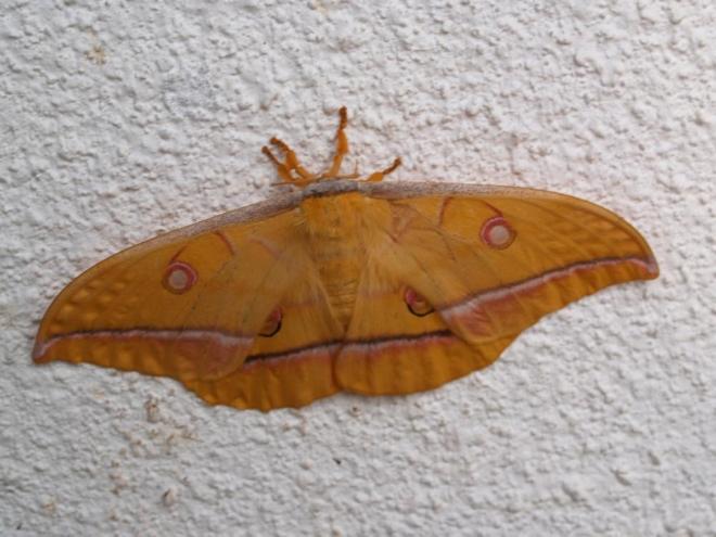 Noční motýl nás uvítal v kempu Vodenica.
