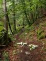 Vlhkost kolem řeky v některých úsecích vytvářela úplný prales, kde stromy obrůstaly mechy a liánami.