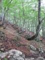 Trochu níže v dolině Tamar se již opět objevují bukové lesy.