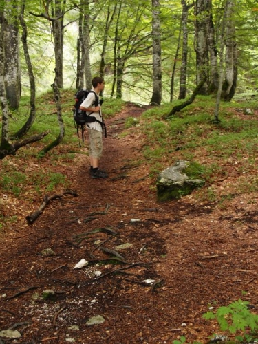Bukové lesy a mezi nimi příjemná stezka mířící do skal.