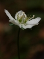 A ještě jeden pohled do botaniky Julských Alp.