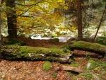 Barvy podzimu září zlatem...