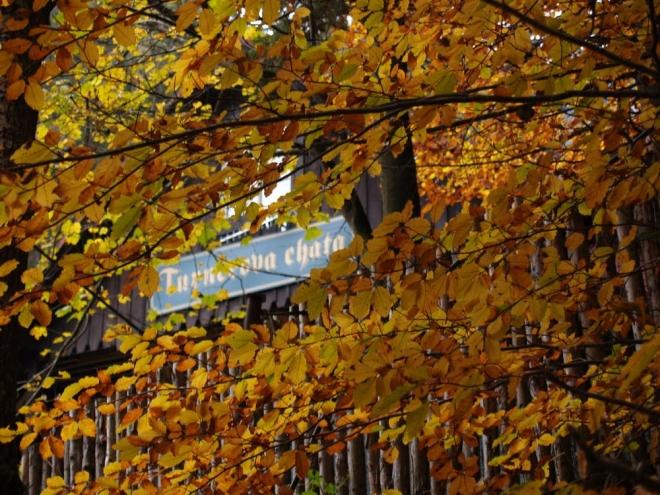 Podzim je o malování, co máš tak ráda. A listí dál jen padá... padá... a padá...