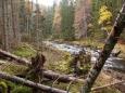 Polomy kůrovcové kalamity jsou již i na Křemelné.