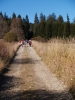 Nad Volarským potokem postupujeme k lesu.
