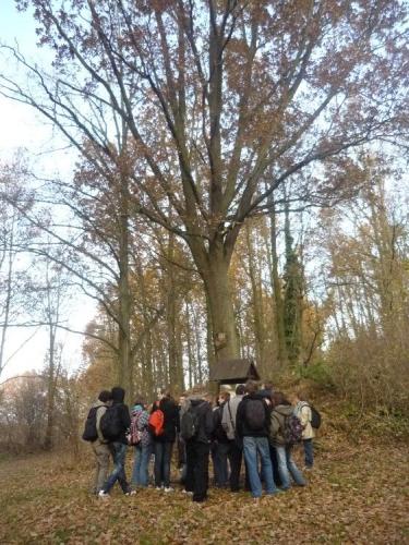 Další vzrostlý strom