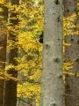 Černá houba vysoko na stromě