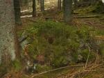 Zapomenuté dříví posloužilo jako zdroj energie pro nové stromky.
