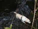 Vodní pes, neustále se koupající