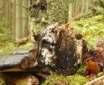 Houba utržená ze stromu