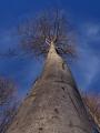 No řekněte, není to výhoda být stromem? Ten rozhled, ten životní klid...