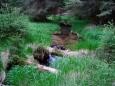 Přes Pašerácký potok si zkracujeme cestu k Lipnu, již nevyužívanou lesní stezkou.