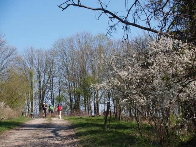 Stoupáme ke kopci s příznačným názvem - Pahorek (657m). Stále se střídají lesy s loukami, máme často hezké rozhledy do okolí.