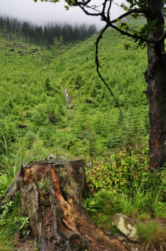 Výhledy k Zadní Planině (1 423m).