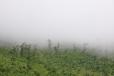 Mlžný prales nemusíte hledat jen na Borneu.