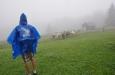 Ovce se dají spatřit i na Krkonošských pastvinách.