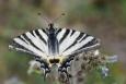 Nahoře se dá bezproblémů vyřádit focením teplomilného hmyzu a motýlů, jako zde otakárka ovocného, nebo zdejší endemické flóry.