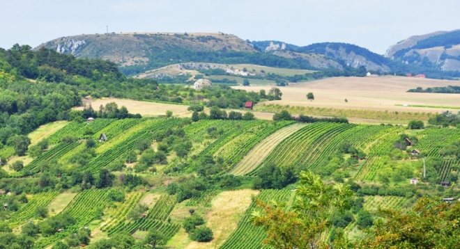 Objektiv přitáhl Stolovou horu, Sirotčí hrádek, Pálavu, strmou Soutěsku a Děvín (vše zleva). A také všudepřítomné vinice.