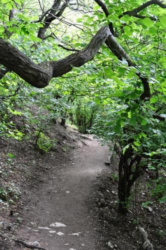 Bujné listnaté lesy sahají až na hřebenové partie Pavlovských vrchů, vyhlídky jsou možné jen z okrajových skalních útesů.
