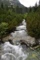 Říčka zde se jmenuje Hincův potok a ještě ji při výstupu párkrát překonáme.