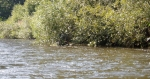 A když nejsou žádné peřeje zpestřují si plavbu Luděk s Lukášem průjezdem roští u břehu (vidíte je uvnitř?). Můžou si tak připsat své druhé cvaknutí.