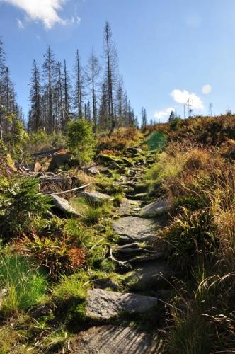 Čím výš jdete, tím víc ubývá okolních stromů. Na hřebeni již jsou jen dokonalé výhledy.