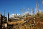 Bohužel není vidět, že by se les sám obnovoval. Semena ve vysoké trávě spalované ostrým horským sluncem nemají nejmenší šanci. Nevěřte všemu, co se říká a píše, zde může vzniknout holý hřbet s ojediněle rostoucími stromy.