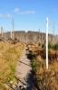 Průsek k Trojmezné byl ještě před sedmi lety zcela zalesněný, ale již napadený lýkožroutem smrkovým.