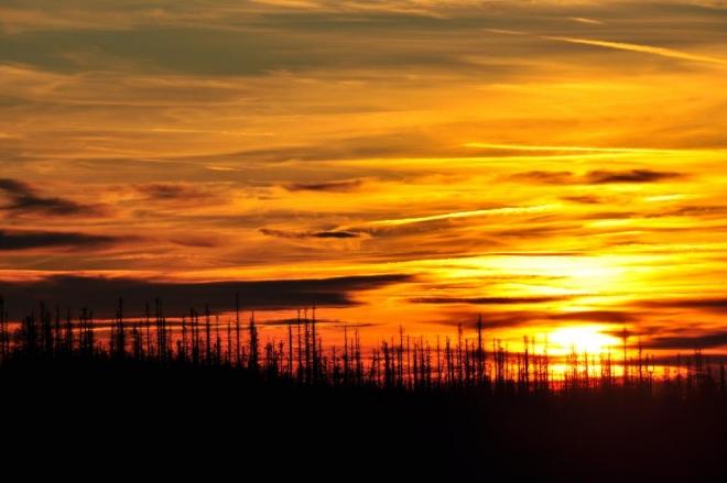 Zlatá je barva nebe a já přemýšlím, jak málo někdy stačí člověku k absolutnímu štěstí.