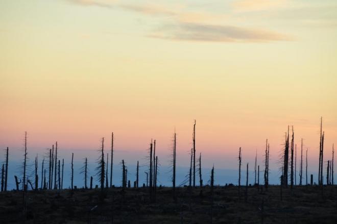 Stromy umírají vstoje. Je v tom strach, smutek i skrytá krása?
