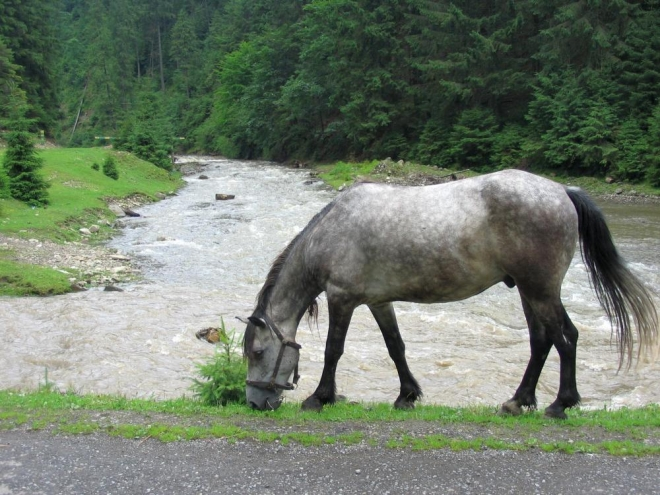 Kůň a řeka