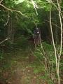 Hustý listnatý les poblíž Koločavy