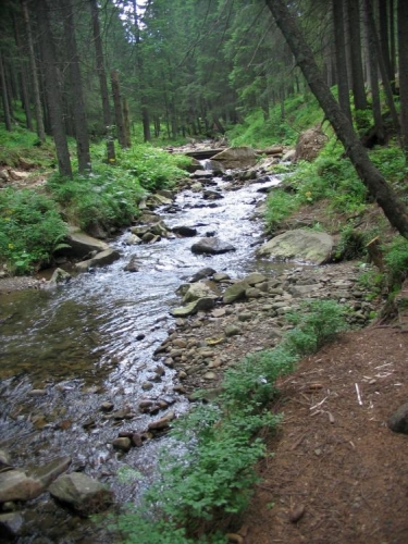 Řeka Prut, zde ještě dravý horský potok