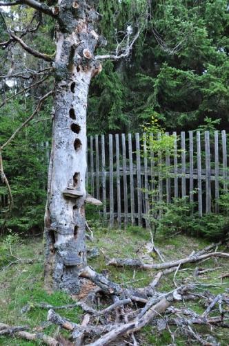 I stromy jednou shodí paroží...