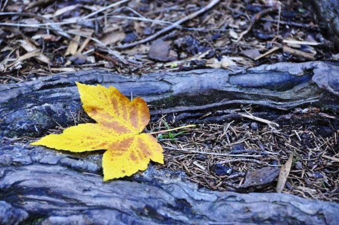 Cestou k Bobíku. Listnaté stromy mají stále svěže zelenou barvu, vyjímku tvoří jen nějaké druhy javotů. Dříve jsme se koncem září brodili spadaným bukovým listím. Změna v přírodě je jasně patrná.