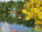 Strpský rybník ozvláštní labuť a přicházejícím podzimen zbarvený jilm.