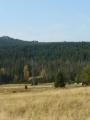 Louka a les na jih od nás, z něhož občas vyčuhují skály (asi Pytlácké skály), zatím v dálce.