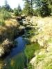 Bílá smědá. Z podobného potoka, který teče trochu více, nabíráme vodu na pití, což se většině nelíbí. Nevím proč, když pastviny tu nikde nejsou a voda teče. :)