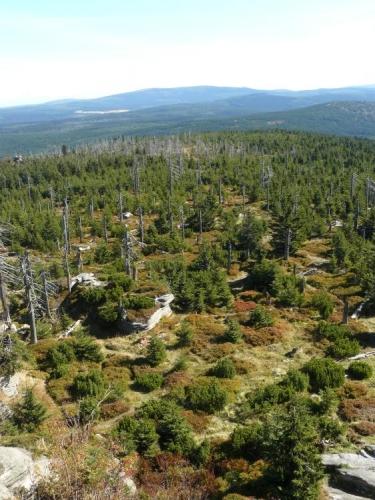 Charakter typického lesa uprostřed Jizerek