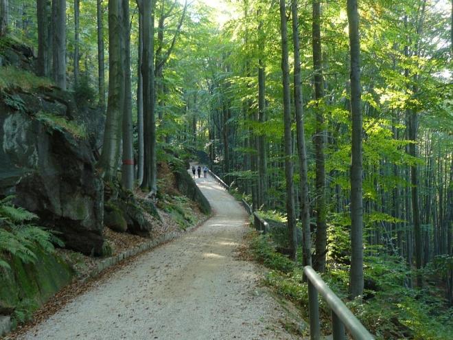 Rauscheckova cesta bukovým lesem. Být tu tak na jaře ...