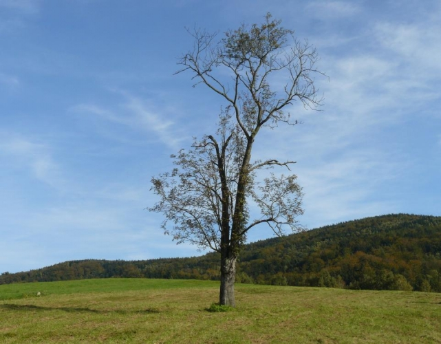 Strom, louka a Jizerky