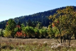 Zatím ještě převládá zeleň, léto bylo vlhké a studené a tak mají stromy ještě dostatek síly. Vyjímku tvoří keře a výrazné javory.