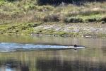 A Luděk si ho zase takhle dobrovolně huntuje v ledové horské vodě.