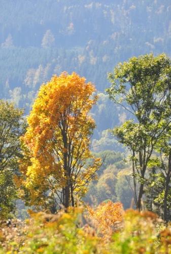 Kraj se opět zabarvuje podzimními barvami, stoupáme s výhledem na vrchy Špičák a Nad Hospodárnicí.