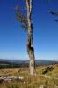Tím, že je dnes vrchol Knížecího stolce bez vzrostlých stromů, stává se ideálním výhledovým místem a bude jistě na čas středem pozornosti turistů.