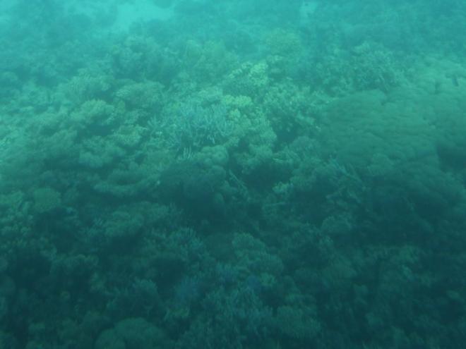 Korály pod vodou