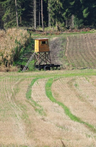 Pojízdný posed: Myslivec zapřáhne starou a přemístí se za prasaty podle toho, kde zrovna ryjou hlínu.