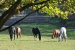 Velký výběh koní je hned vedle dostihového závodiště.
