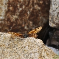 7.KŘEHKOST KŘÍDEL MOTÝLÍCH: tvrdost kamene je ukryta do lehkých křídel. Vždyť kámen, motýlí křídla i my jsme stvořeni ze stejných atomů a molekul.