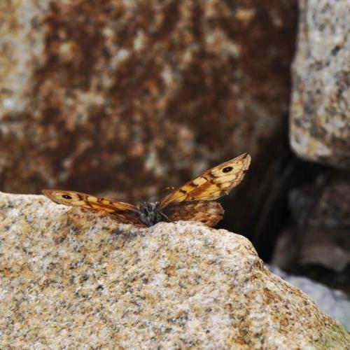 7.KŘEHKOST KŘÍDEL: tvrdost kamene je ukryta do lehkých křídel. Vždyť kámen, motýlí křídla i my jsme stvořeni ze stejných atomů a molekul.